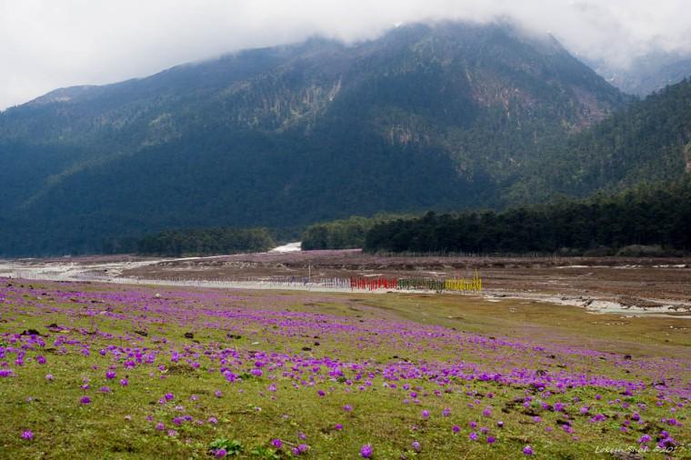 Sikkim2017_746